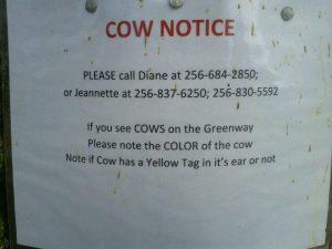 cow notice