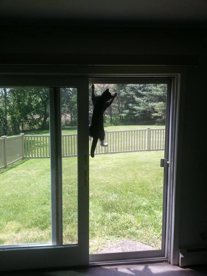 Screen Spider Cat